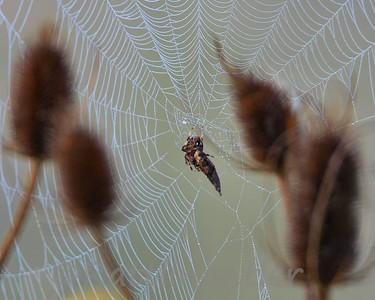 Spider91209_001