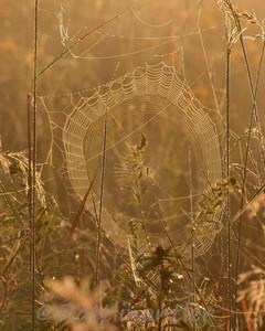 SpiderWeb83108_001