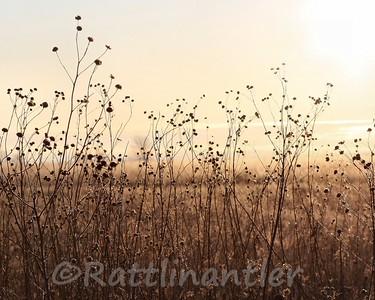Sunrise010910_011