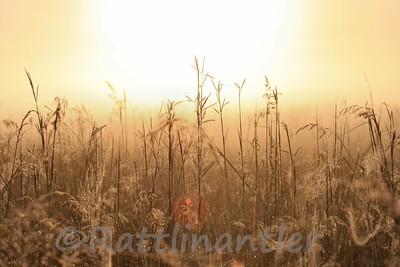 Prairie83108_002