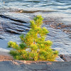Small tree at shoreline
