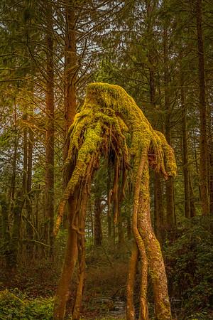 Forest Alien