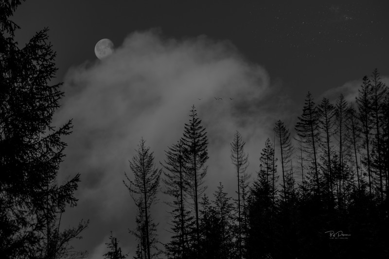 Misty Moon B&W
