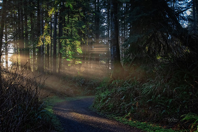 Chasing Light in Oregon Forest