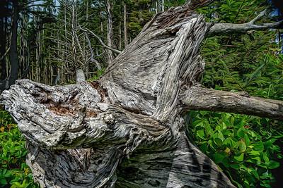 Fantasy Wood