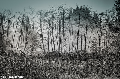 Kat's mist