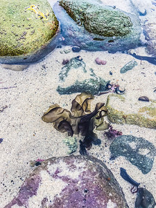 Leo Carrillo State Beach XI, California