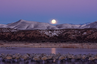 Moon setting over frozen pond, sleeping birds
