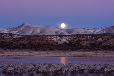 Moon setting over frozen pond, sleeping birds