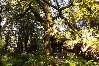 Rain forest in Prehistoric Gardens site.