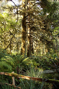 Part of the actual rain forest making up the Prehistoric Gardens, south of Port Orford, OR
