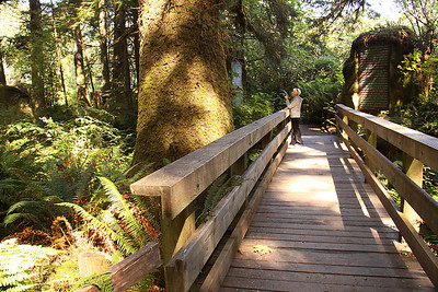 Prehistoric Gardens, south of Port Orford, OR