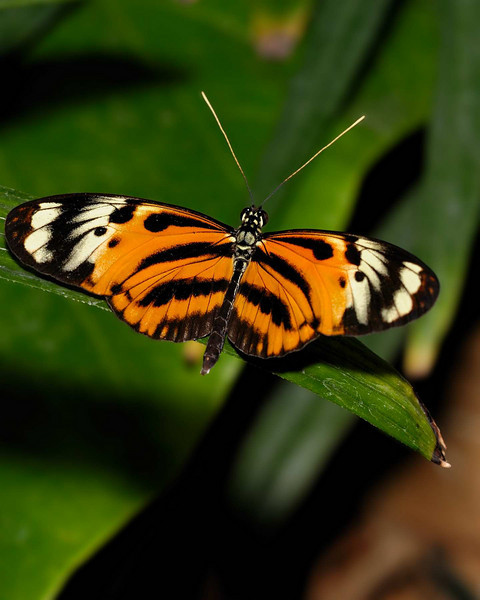 2009 Meijer Garden Butterfly Exhibit