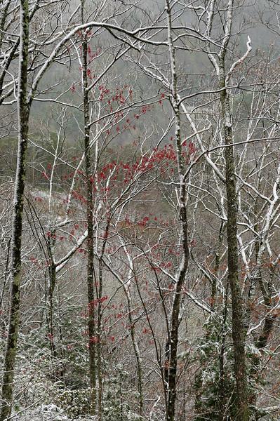 2009 Smokey Mountains