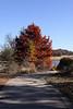 Bald Cypress by the bridge to the Island Gardens   Powell Gardens Nov. 1, 2009