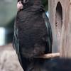 Tedious Parrot