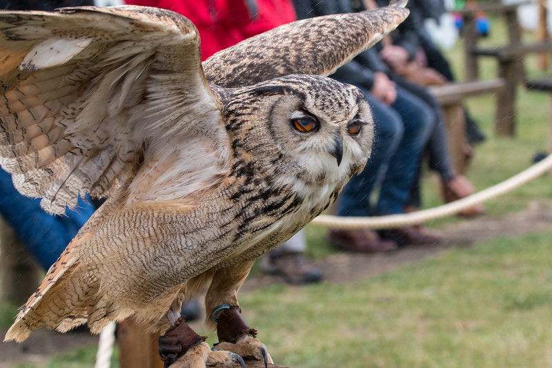 Owl Demonstration