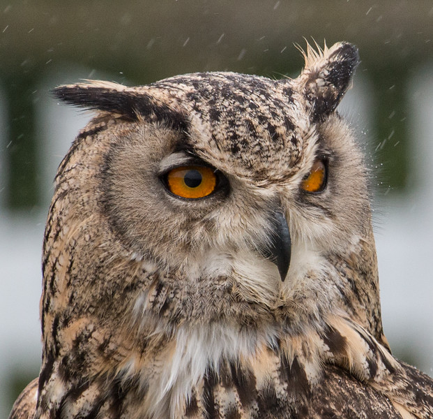 Owl Demonstration