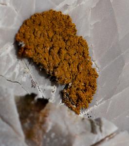 Lichen, Alkhornet
