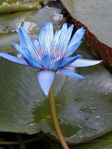 Kew, June 2000