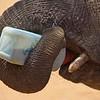 Shaba the Matriach, Reteti Elephant Sanctuary
