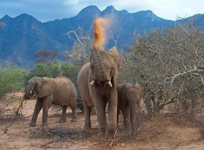 Elephant, Namunyak Conservancy