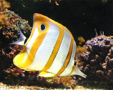 Aquarium - Amsterdam Zoo