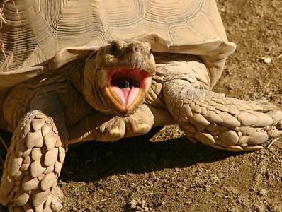 Living Desert Wildlife Reserve, Palm Desert