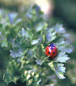 Ladybird, Burghfield Common