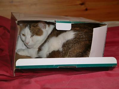 Bonnie and Box04 (2)