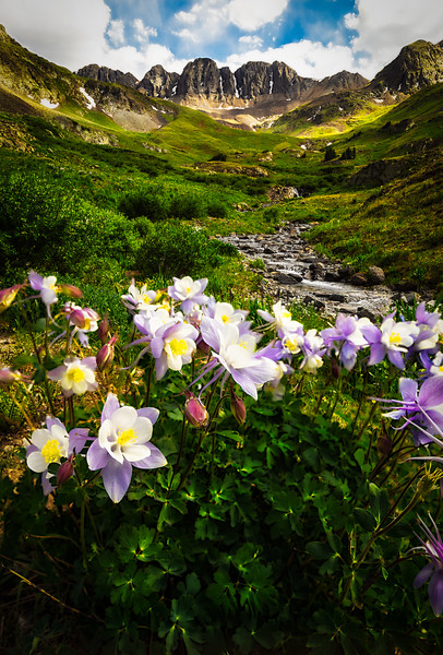 Columbine in American Basin