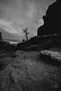 Lone sentinel