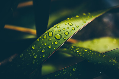 #Raindrops keep falling on my leaf