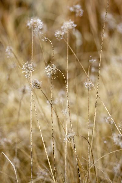 Dewy Grass 2