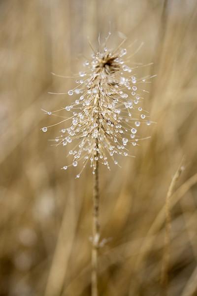 Dewy Grass 1