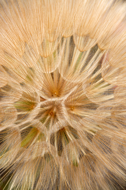 Seedhead 3