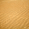 Sidewinding Tracks of Arabian Horned Viper