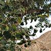 Sidra with fruit