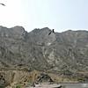 Black Kites at garbage tip
