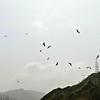 Circling Kites