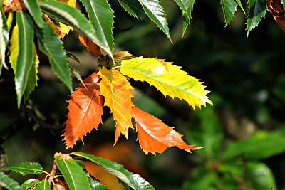 Dicots-Ericaceae to Fagaceae