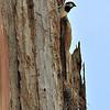 House Sparrow wih nest