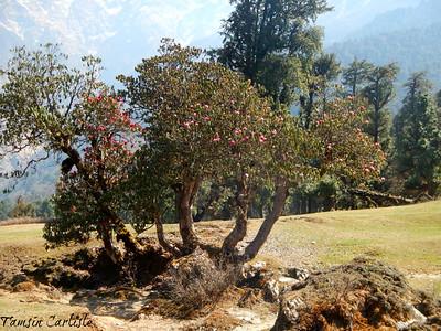 Uttarakhand 066