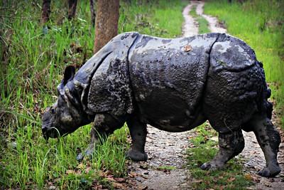 Nepali Fauna