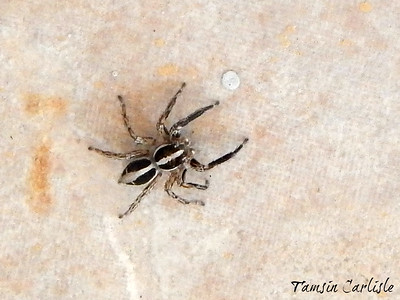 Spiders and Mites