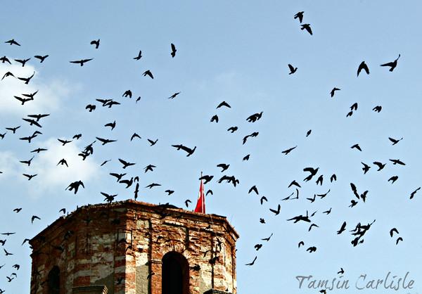 Jackdaw Flock