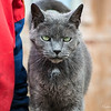 Levi (Barn Cat)
