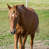 Cruz (Pony)