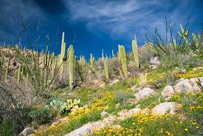 Spring Bloom, Tucson, AZ