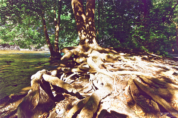 Beautiful Roots